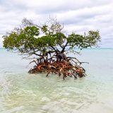 Cayo Lévisa-La Mangrove
