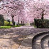 Printemps 2018-Parc Verlaine 1400px--3